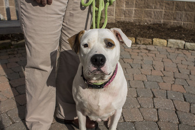 connecticut-humane-society-changes-its-hours