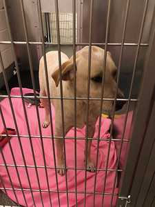 find-a-new-furry-friend-in-newington-during-clear-the-shelters-on-saturday