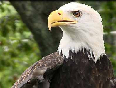 atka-the-eagle-found-safe-and-sound-in-ashford