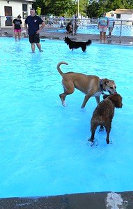 the-paws-that-refreshes-pooches-enjoy-a-dog-day-swim
