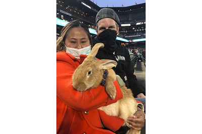 bunny-hits-a-home-run-with-fans-at-ballpark