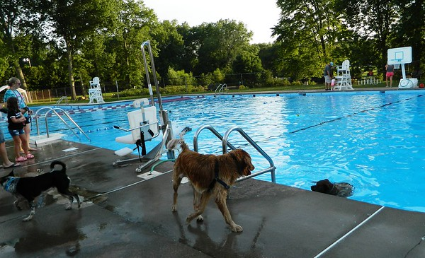 New Britain Herald - Pooches have run of pool for an evening in ...