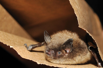 journeys-with-jim-brown-bats-becoming-scarce-this-time-of-year