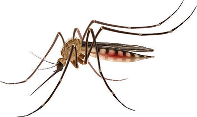 1st-human-west-nile-cases-of-season-confirmed-in-newington-and-fairfield