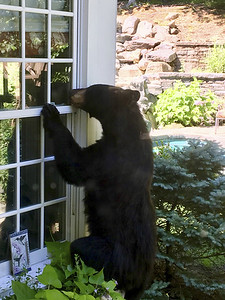 is-a-hunt-the-answer-when-bears-start-getting-bolder