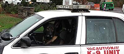police-k9-locates-missing-9yearold-with-special-needs