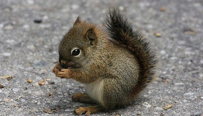 berlin-animal-hospital-treats-4-baby-squirrels-bound-by-their-tails