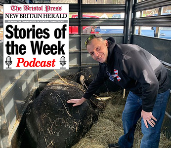 podcast-talking-buddy-the-beefalo-with-plymouth-police-captain