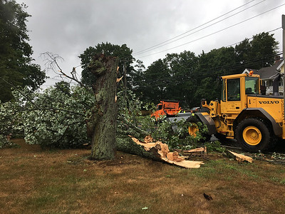 falling-tree-kills-connecticut-man-during-height-of-storm