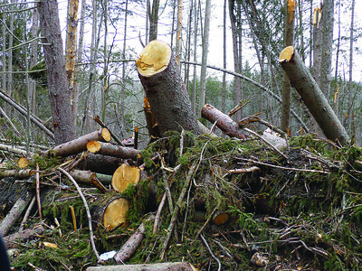 eversource-works-to-remove-or-trim-dying-dead-and-hazardous-trees-in-the-state
