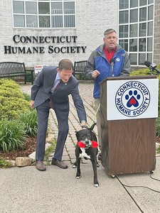 blumenthal-connecticut-humane-society-warn-residents-of-petbuying-scams