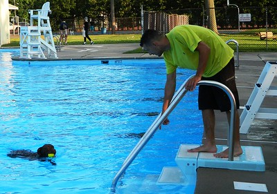 pooches-in-pool-as-newington-season-ends
