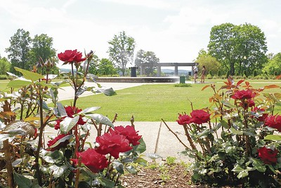 volunteers-sought-to-tend-to-walnut-hill-parks-roses