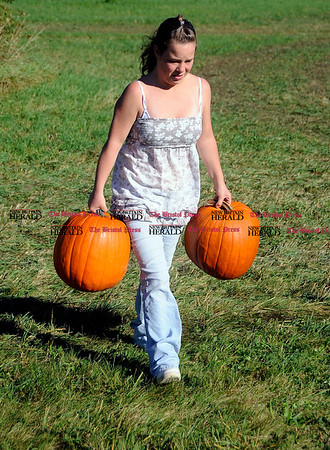 10/2/2010 Mike Orazzi | Staff Crystal DuBois of New Britain carries some pumpkins in the pumpkin patch at Minor's Farm during Family Farms Day on Saturday.