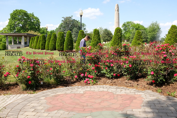 060216 Wesley Bunnell | Staff Views of the Rose Garden at Walnut Hill Park in New Britain on Thursday afternoon.