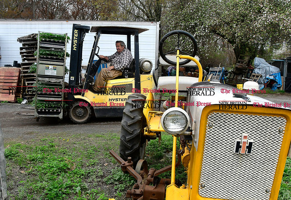 4/27/2017 Mike Orazzi | Staff Jim Zarrella moves plants around at Zarrella Farms in Plainville.