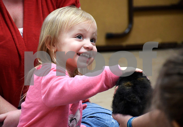 2/10/2018 Mike Orazzi | Staff Gracefull Kieffer, 2 1/2 while petting Bruno a Guinea pig at the New Britain Youth Museum at Hungerford Park during the Wild about Animals Valentine's Day Party on Saturday in Kensington.