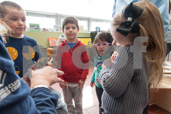 01/25/18 Wesley Bunnell | Staff Children were able to get an up close look at animals at Imagine Nation in Bristol on Thursday afternoon. During the 1:30pm show run by Karen Pac Joey Beauchemin, age 5, Manny Moreiras, age 4, Anabella Moreiras, age 2, and Alayna Ljubuncic, age 3, all look on as Karen Pac explains the care of a hedgehog.