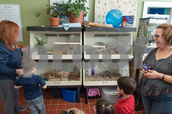 01/25/18 Wesley Bunnell | Staff Children were able to get an up close look at animals at Imagine Nation in Bristol on Thursday afternoon. Children look into the cages which house a corn snake, bearded lizard, hedgehog and a python.