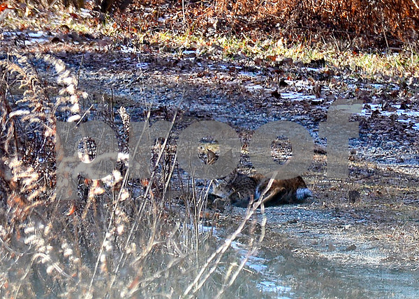 1/5/2016 Mike Orazzi | Staff