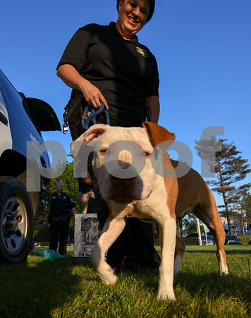 071917 Wesley Bunnell | Staff The second annual Pets-A-Palooza was held at Walnut Hill Park on on Wednesday evening. Detective Tina Steele holds Frances who is up for adoption at the New Britain Animal Shelter.
