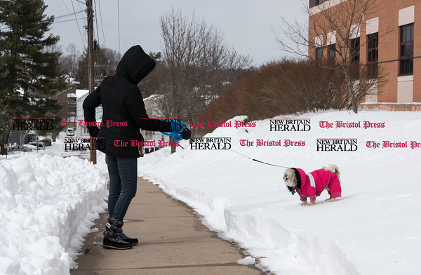 031517 Wesley Bunnell   Staff Roxanne Overby walks her 1 year old Shitzu, Zina, who was dressed for the cold weather on Wednesday March 15.