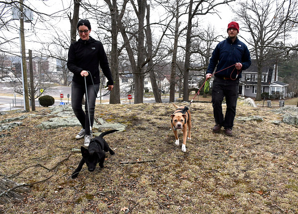 3/29/2018 Mike Orazzi | Staff Tina Monteleone walks with Cooper and John Papa walks with Maya on the Federal Hill Green in Bristol Thursday afternoon.