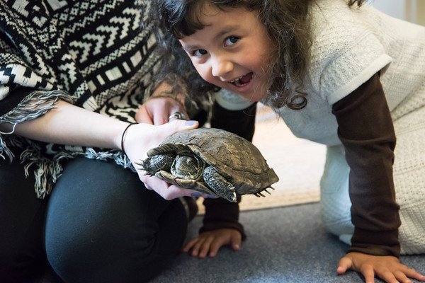 03/27/18 Wesley Bunnell | Staff Cayana Soler, age 4, smiles as she gets a close up look at a Red Eared Slider Turtle named Donatello as Program Teacher Liz Watt holds him at the Children's Museum at 30 High St in New Britain on Tuesday morning. The Museum held a Meet, Greet and Read with Animals event which was free to the public.