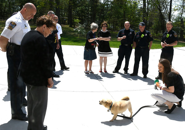 5/11/2018 Mike Orazzi | Staff Hubbell School teacher Erin Daly shows off her dog Toby, the city's new mascot Friday afternoon.