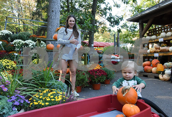 10/02/17 Wesley Bunnell   Staff Griffin Linehan, age 1, helps his mother Megan Linehan pick out pumpkins to decorate their house on Monday afternoon at Karabin Farm in Southington.