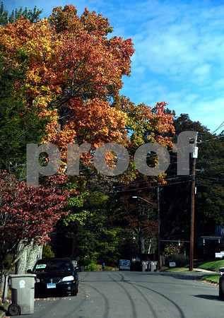 10/13/2017 Mike Orazzi | Staff Fall color on Grove Street in Bristol Friday.