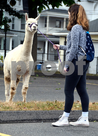 10/14/2017 Mike Orazzi | Staff Southington High School Regional Agriculture Program's Natalie Thomas with Allie the llama during a Harvest Day Festival held at the Imagine Nation Museum Early Learning Center in Bristol Saturday morning.