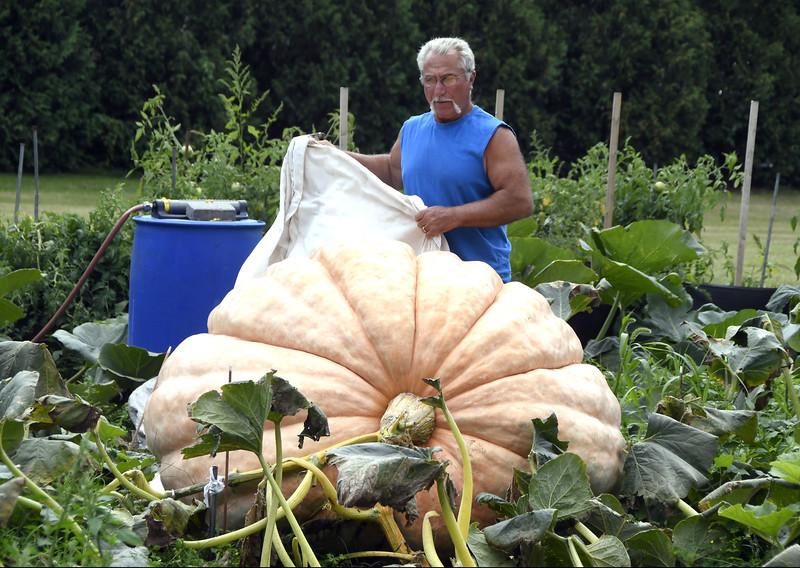 GiganticPumpkins-PL-090617_6983