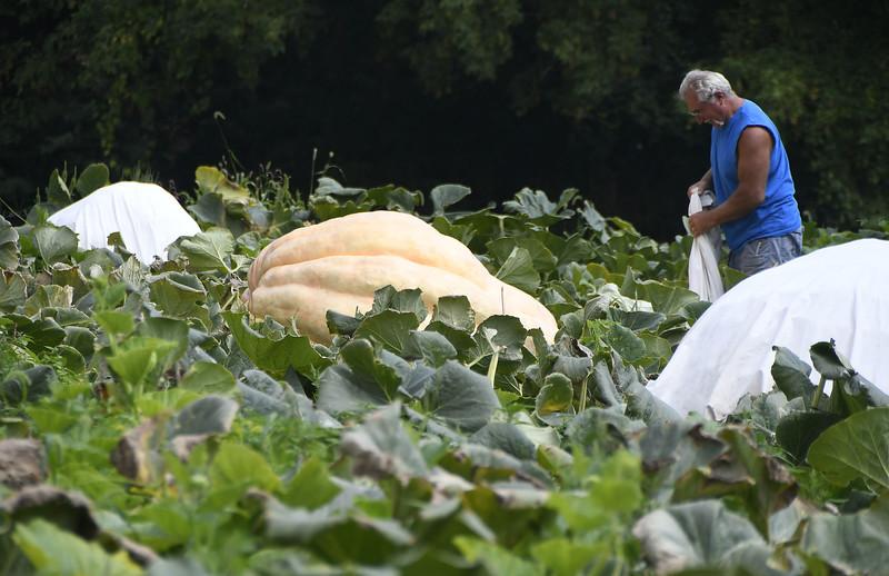GiganticPumpkins-PL-090617_7036