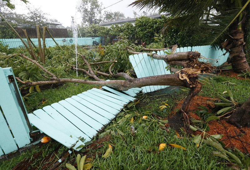 Irma tree down-091117