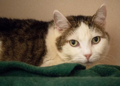 pet-of-the-week-mitsy
