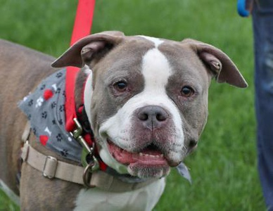 pet-of-the-week-hova