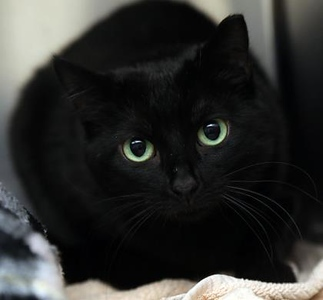 pet-of-the-week-cleo