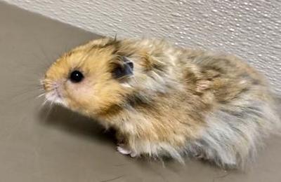 pet-of-the-week-houdini