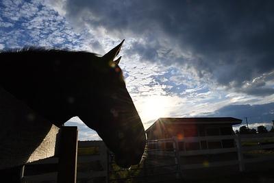 shepard-meadows-equestrian-center-offering-free-program-to-help-students-improve-socialemotional-skills