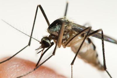 threat-of-eee-virus-causes-bristol-public-schools-to-reschedule-sporting-events
