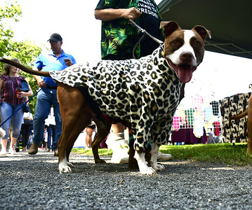 dogs-flock-to-bristol-for-fourth-annual-bow-wow-in-the-park