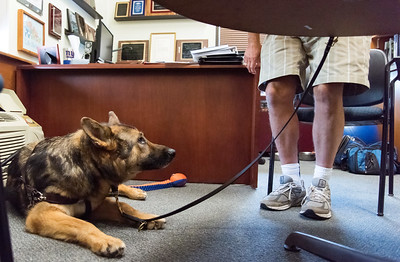 service-and-support-dogs-a-lifeline-for-many