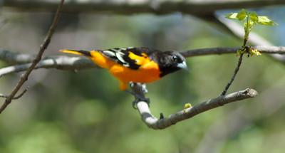 journeys-with-jim-important-to-preserve-wildlife-habitats