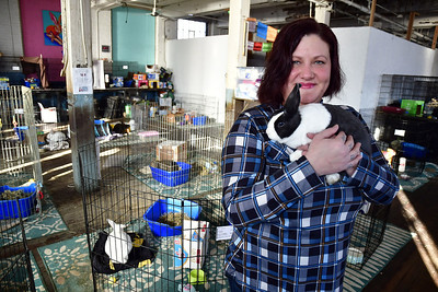 rabbits-will-have-to-find-new-home-after-sessions-building-in-bristol-turns-into-apartments