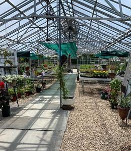 the-garden-at-pinehurst-brings-back-mums-seasonal-plants-to-revitalized-site-of-former-bristol-nursery