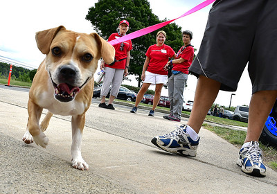 ct-humane-society-clears-the-shelters-at-adoption-event