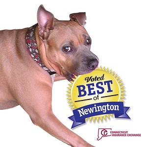 newington-business-spotlight-connecticut-insurance-exchange