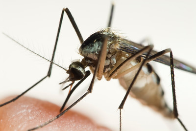 mosquitoes-test-positive-for-west-nile-in-wethersfield