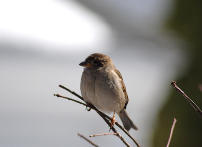 journeys-with-jim-spring-means-its-time-to-start-bird-watching